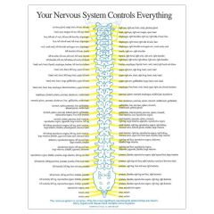 Your Nervous System Insert