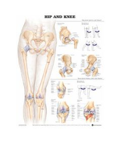 Hip & Knee