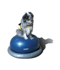 FitPAWS® Donut Holder