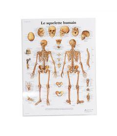 Système Squelettique Charte (Francais)